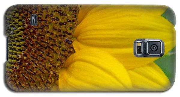 Sunflower Closeup Galaxy S5 Case