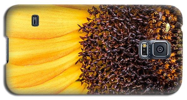 Sunflower Closeup Galaxy S5 Case by Bob Orsillo