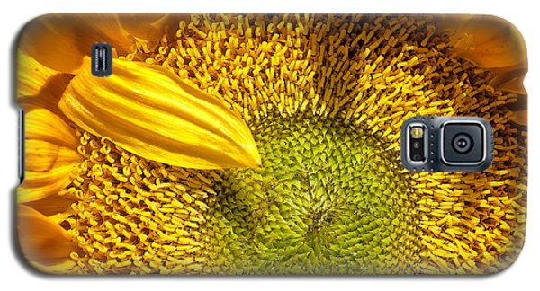 Sunflower Closeup Galaxy S5 Case