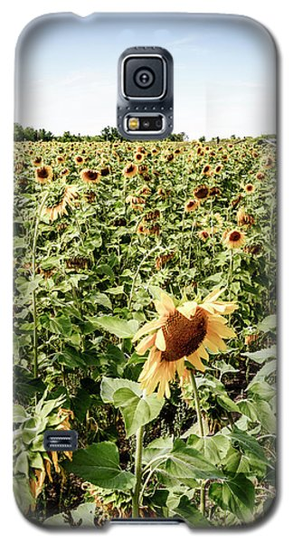 Galaxy S5 Case featuring the photograph Sunflower Field by Alexey Stiop