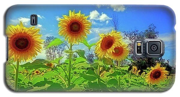 Sunflower Field Galaxy S5 Case by Rodney Campbell