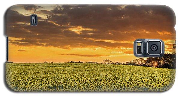 Sunflower Fields Sunset Galaxy S5 Case