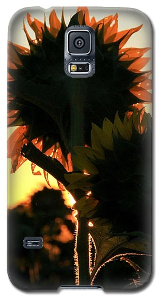 Galaxy S5 Case featuring the photograph Sunflower Greeting  by Chris Berry