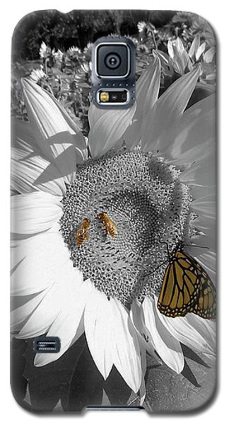 Sunflower In Black And White Galaxy S5 Case
