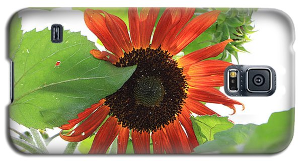Sunflower In The Afternoon Galaxy S5 Case