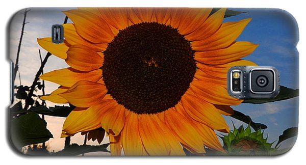 Sunflower In The Evening Galaxy S5 Case by Ernst Dittmar