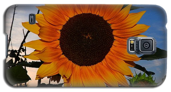 Sunflower In The Evening Galaxy S5 Case