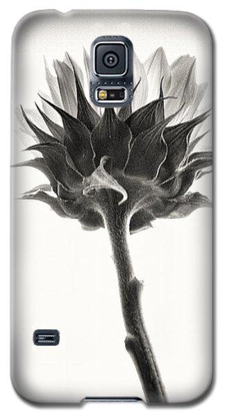 Galaxy S5 Case featuring the photograph Sunflower by John Hansen