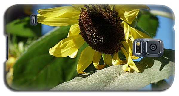Sunflower, Lemon Queen, With Pollen Galaxy S5 Case