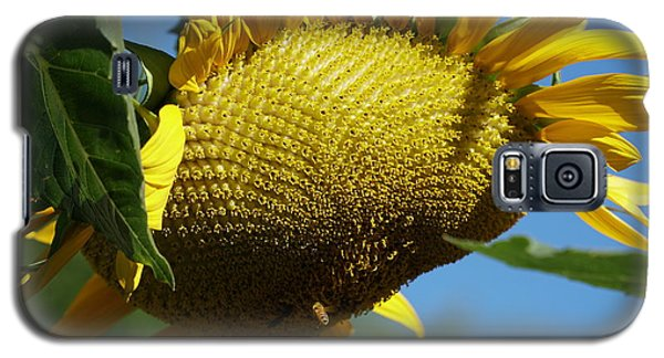 Sunflower, Mammoth With Bees Galaxy S5 Case