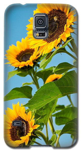 Sunflower Morning Galaxy S5 Case