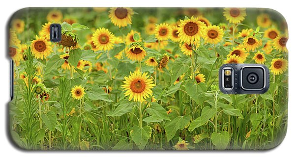 Sunflower Patch Galaxy S5 Case
