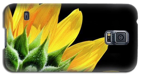 Galaxy S5 Case featuring the photograph Sunflower Petals by Christina Rollo