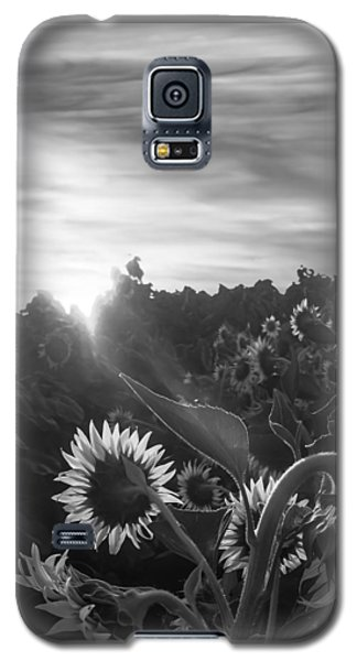 Sunflower Rise In Black And White Galaxy S5 Case