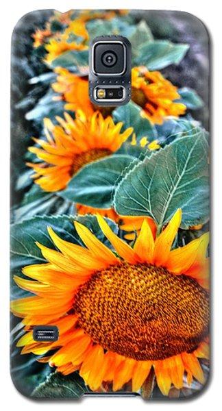 Sunflower Row Galaxy S5 Case