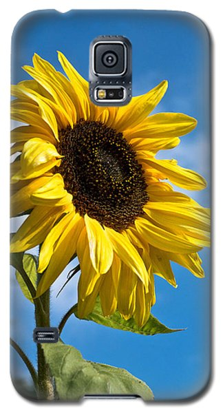 Sunflower Galaxy S5 Case by Scott Carruthers