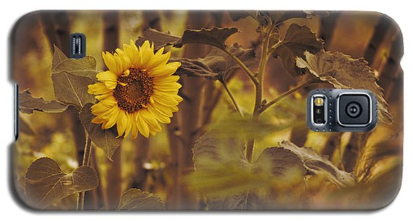 Galaxy S5 Case featuring the photograph Sunflower Sentry by Douglas MooreZart