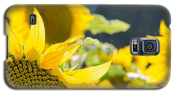 Sunflowers 14 Galaxy S5 Case