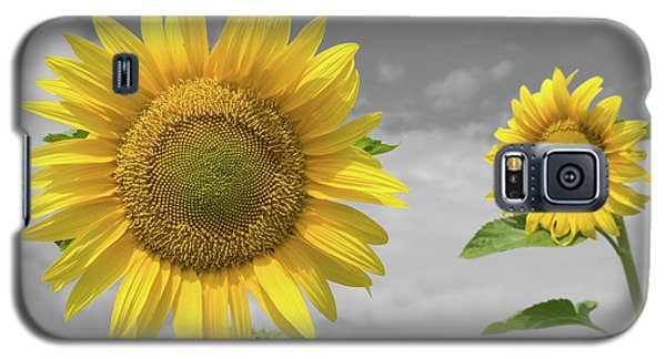 Galaxy S5 Case featuring the photograph Sunflowers V by Dylan Punke