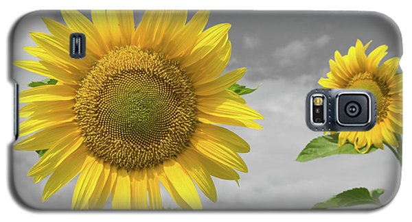 Sunflowers V Galaxy S5 Case