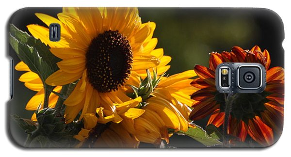 Sunflowers 8 Galaxy S5 Case by Marjorie Imbeau