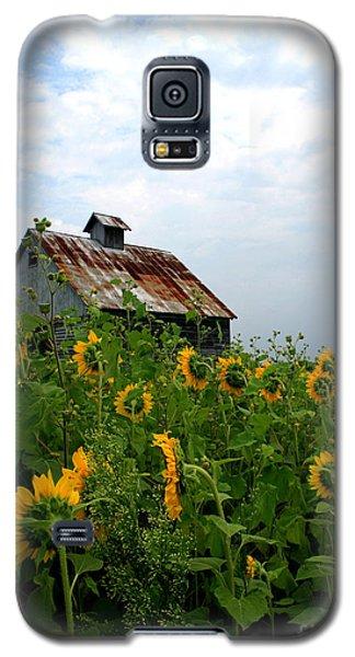 Sunflowers Along Rt 6 Galaxy S5 Case