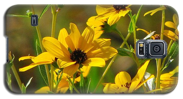 Sunflowers Along The Trail Galaxy S5 Case by Barbara Bowen