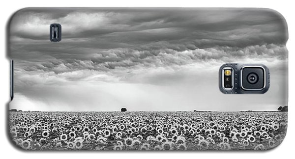 Sunflowers And Rain Showers Galaxy S5 Case by Penny Meyers