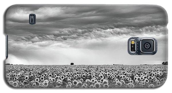 Sunflowers And Rain Showers Galaxy S5 Case