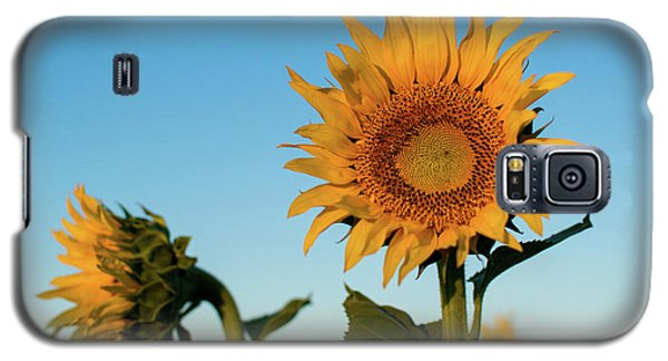Sunflowers At Sunrise 1 Galaxy S5 Case