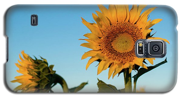 Sunflowers At Sunrise 1 Galaxy S5 Case
