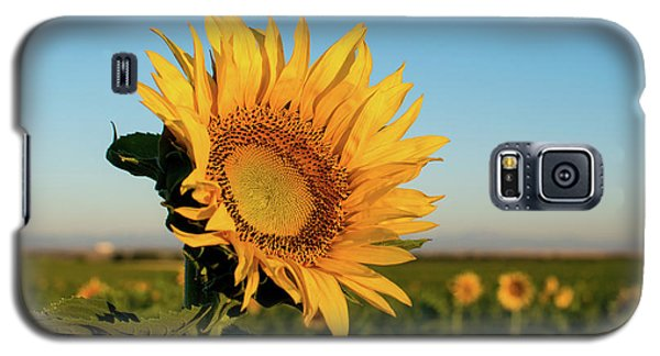 Sunflowers At Sunrise 2 Galaxy S5 Case