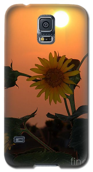 Sunflowers At Sunset Galaxy S5 Case by Kathy  White