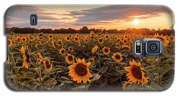 Sunflowers At Sunset Galaxy S5 Case