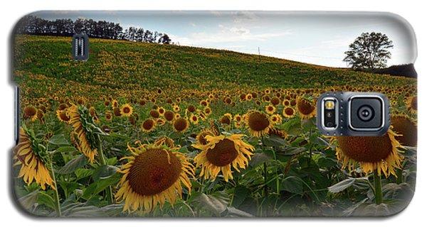 Sunflowers Fields  Galaxy S5 Case