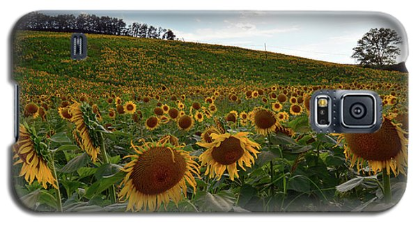 Sunflowers Fields  Galaxy S5 Case