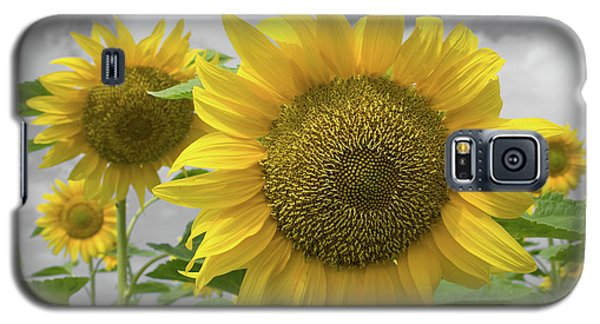 Sunflowers IIi Galaxy S5 Case