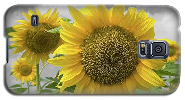 Galaxy S5 Case featuring the photograph Sunflowers IIi by Dylan Punke