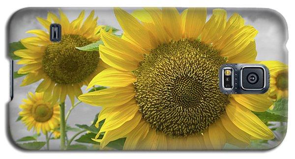 Sunflowers IIi Galaxy S5 Case
