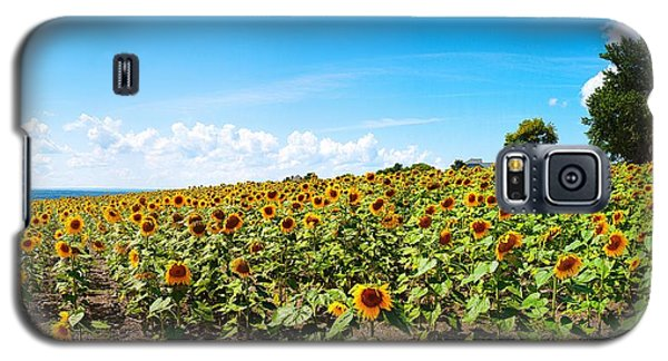 Galaxy S5 Case featuring the photograph Sunflowers In Ithaca New York by Paul Ge