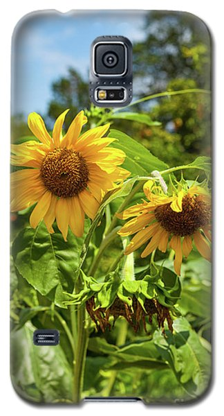 Sunflowers In Sunshine Galaxy S5 Case