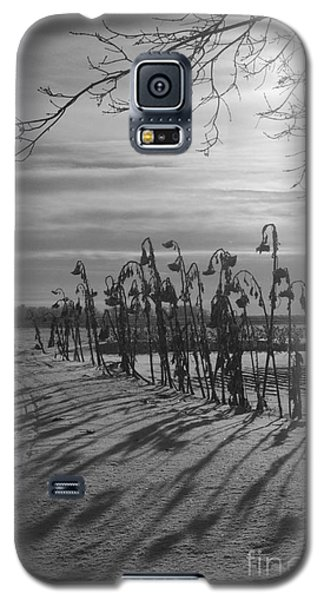 Sunflowers In The Winter Sun Galaxy S5 Case by Mary Mikawoz