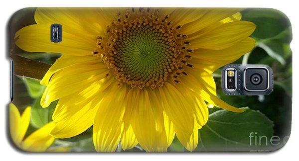 Sunflowers-just Bloomed Galaxy S5 Case