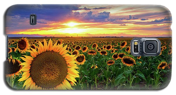 Sunflowers Of Golden Hour Galaxy S5 Case
