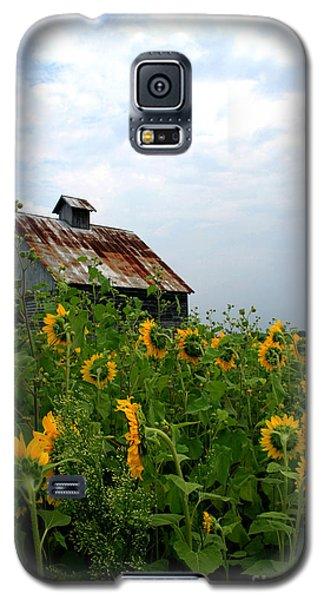 Sunflowers Rt 6 Galaxy S5 Case