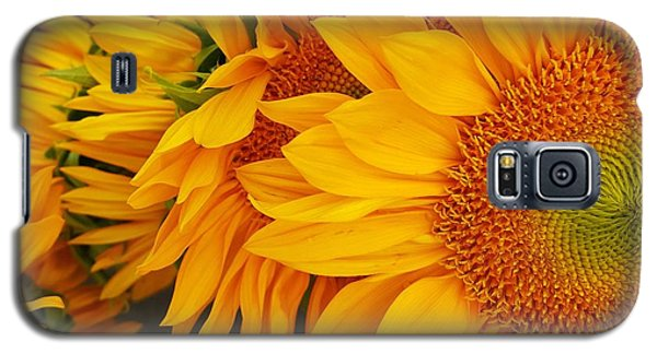 Sunflowers Train Galaxy S5 Case