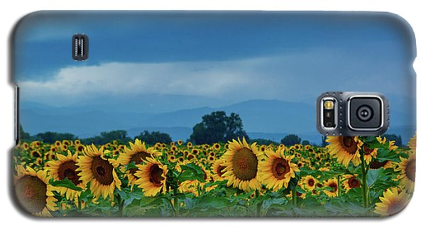 Sunflowers Under A Stormy Sky Galaxy S5 Case