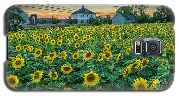 Sunflowers For Wishes  Galaxy S5 Case