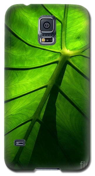 Galaxy S5 Case featuring the photograph Sunglow Green Leaf by Patricia L Davidson