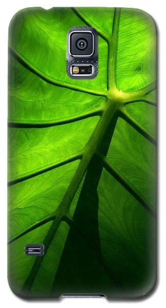 Sunglow Green Leaf Galaxy S5 Case by Patricia L Davidson